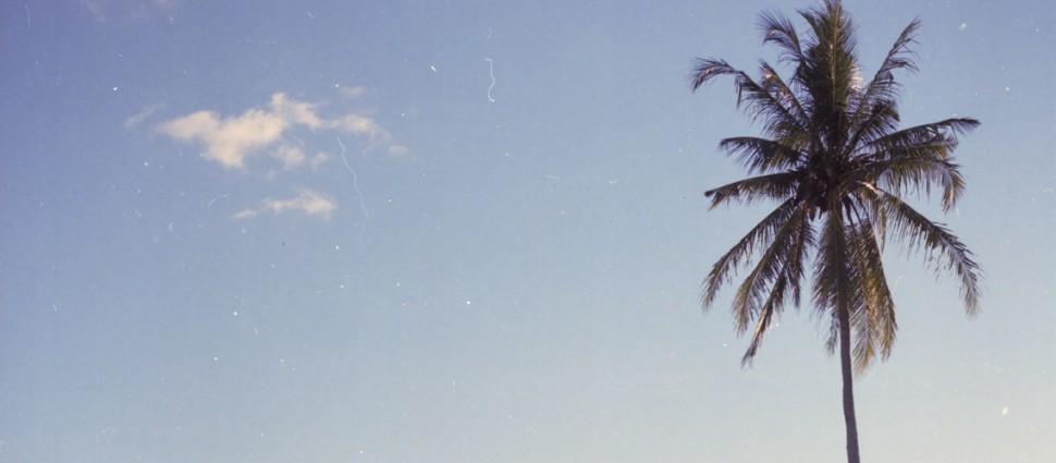 OY Surf Apparel Palm